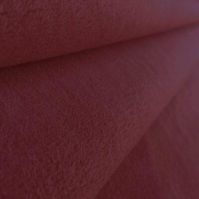 Tulip - red velvet